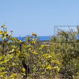 Terreno a poucos metros da entrada proncipal de Vilamoura com 28.000 m2 com vista mar para construcao de uma moradia